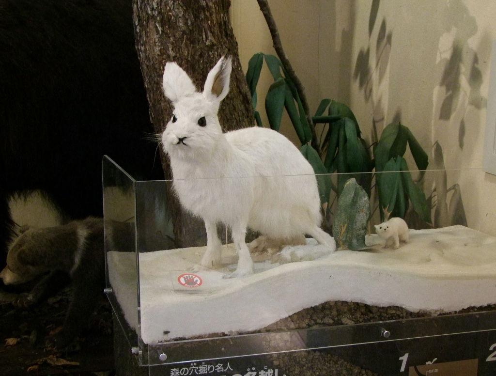 ユキウサギの画像 p1_39